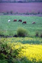 paysage des Côtes-d'Armor
