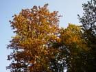 Paysages d automne