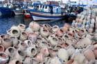 Pêche aux poulpes