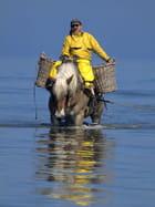 Pêcheur de crevettes à cheval