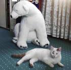 Peluche et papa ours