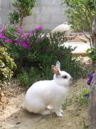 Pépette le lapin dans le jardin