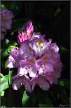 Période fleurie