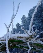 Perles de neige