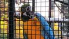 Perroquet en cage