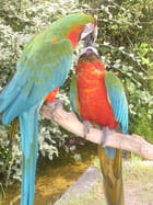 Perroquets amoureux