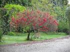 Petit arbre coloré