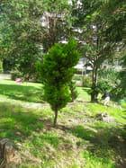 Petit arbuste au milieu