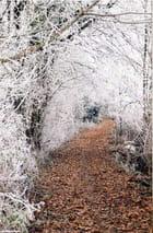 Petit chemin de sous bois sous le givre