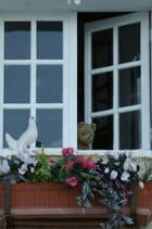 Petit curieux à la jolie fenêtre
