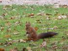Petit écureuil gourmand.