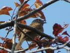 Petit oiseau discret