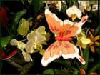 Petit papillon de jardin !