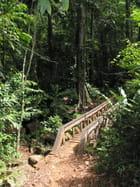 Petit pont de bois...