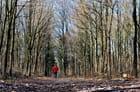 petite course en forêt (ras du sol)