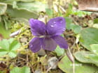 Petite fleur discrète