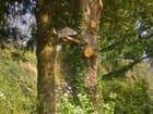 Petite maison dans un arbre