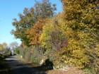 Petite route à l'automne