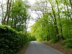 Petite route verdoyante - 1 (Normandie)