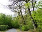 Petite route verdoyante - 2 (Normandie)