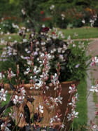 Petites fleurs dans le parc