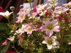 Petites fleurs fragiles