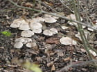 Petits champignons