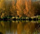 Peupliers de Loire