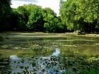 Pièce d'eau, parc du château de Cheverny
