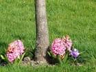 Pied en fleurs