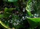 Piège à pluie !.