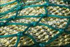 Pièges colorés