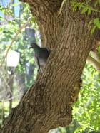 Pigeon curieux