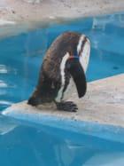 Pingouin sans tête