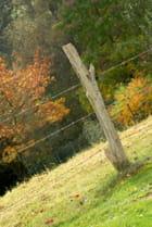 Piquet d'automne