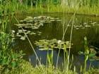 Plan d'eau aquatique jardin de Chaumont