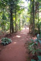 plantation d'épices Savoi