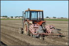 Plantation des pommes de terre...