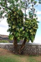 plantes de La Réunion