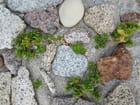 plantes et galets