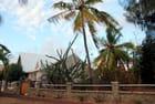 plantes grasses et palmiers
