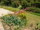 Plantes grasses pleines de grâce