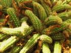 Plantes tropicales.