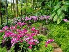 Plate bande d'orchidées