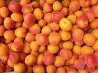 Plateau d'abricots