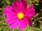 Pleine fleur