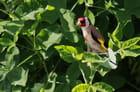 plumage de printemps