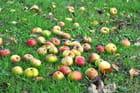 pommes a cidre