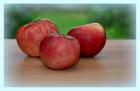 Pommes  Reinette