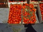 Pomodori per salsa